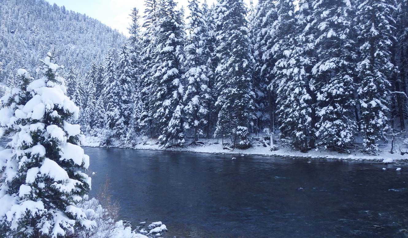 River passing through snow-covered evergreen trees.
