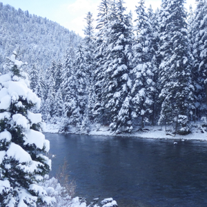 The Gallatin River in Montana surrounded by snowy evergreen trees.