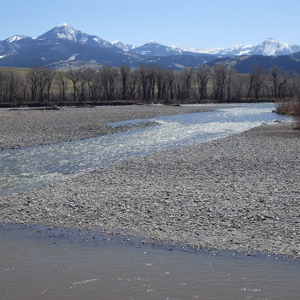 The Yellowstone River flowing through trees near Livingston, Montana, with mountains in the background.